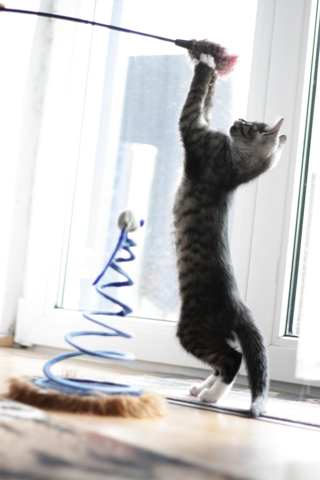 Kitten beim Spielen