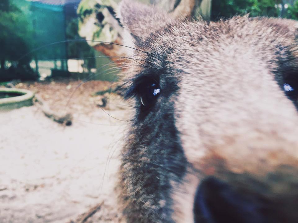 follow-me-around-australien