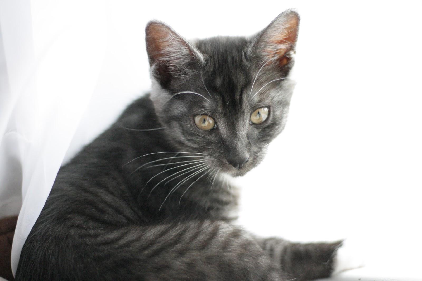 Kitten Foto