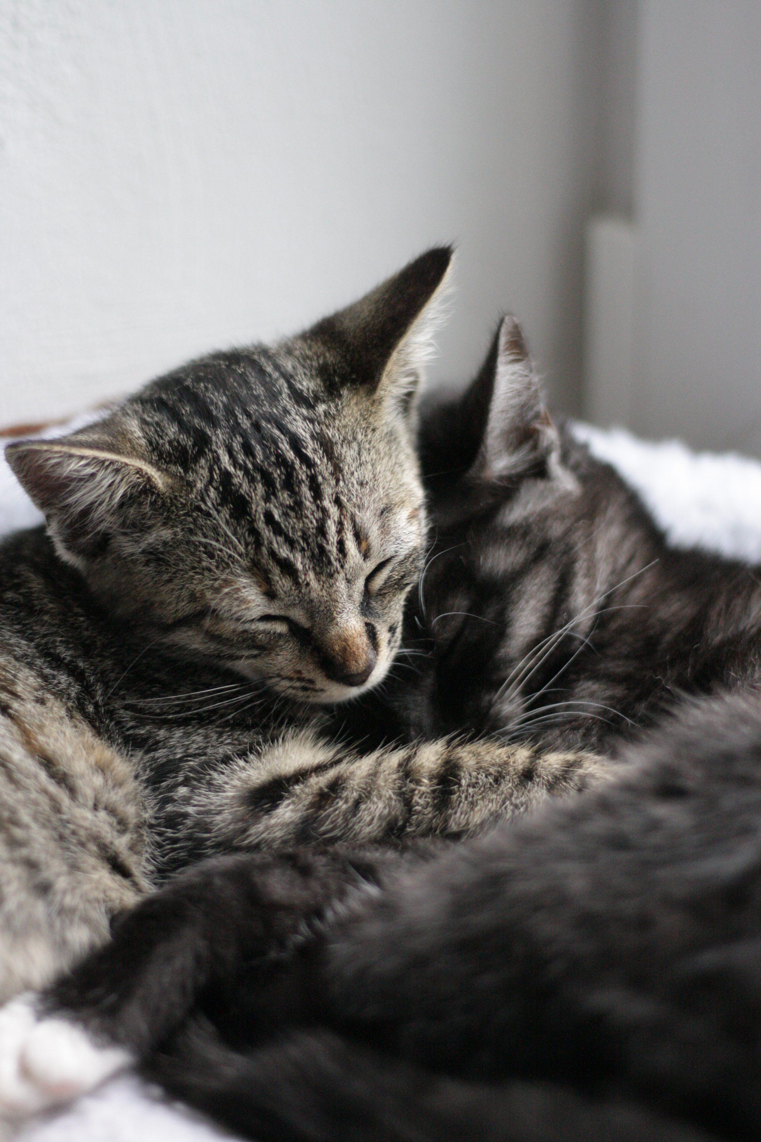 Bella und Molly - Katzenpärchen